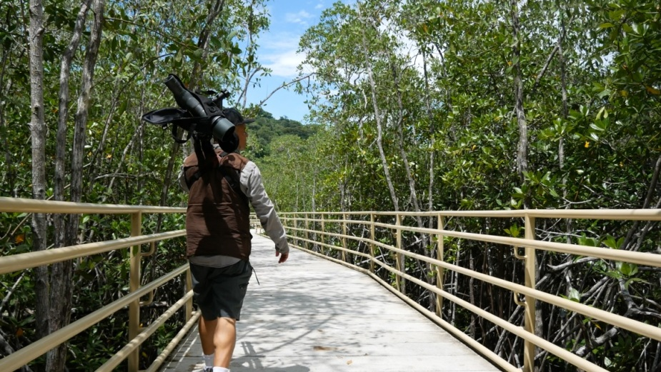 mangrovenmauricio